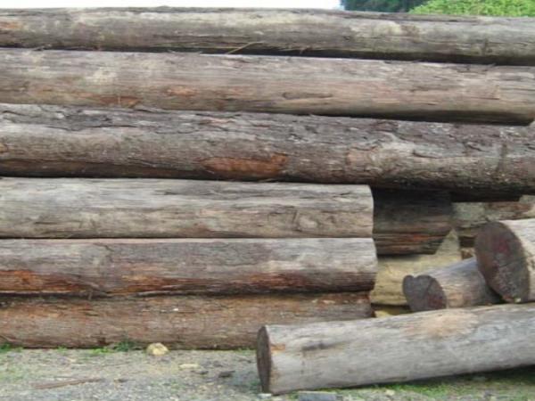 Gỗ Táu Mật tròn (Talauma wood)
